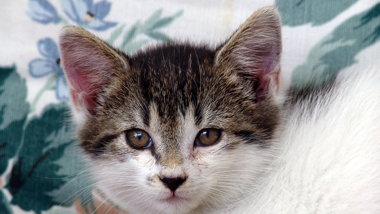 Weil sie zwei Katzen mit einem Schnürsenkel stranguliert hat, wurde eine 20-Jährige zu einer Jugendstrafe auf Bewährung verurteilt. (Symbolbild)