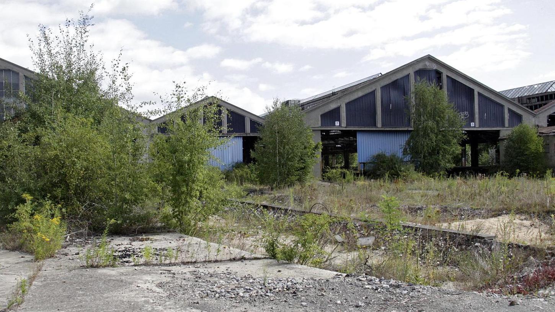 Die Natur hat sich das Areal um die Hallen inzwischen zurückerobert. Die Bauten könnten auch gut in einen neuen Stadtteil integriert werden, meinen die Ausstellungsmacher.