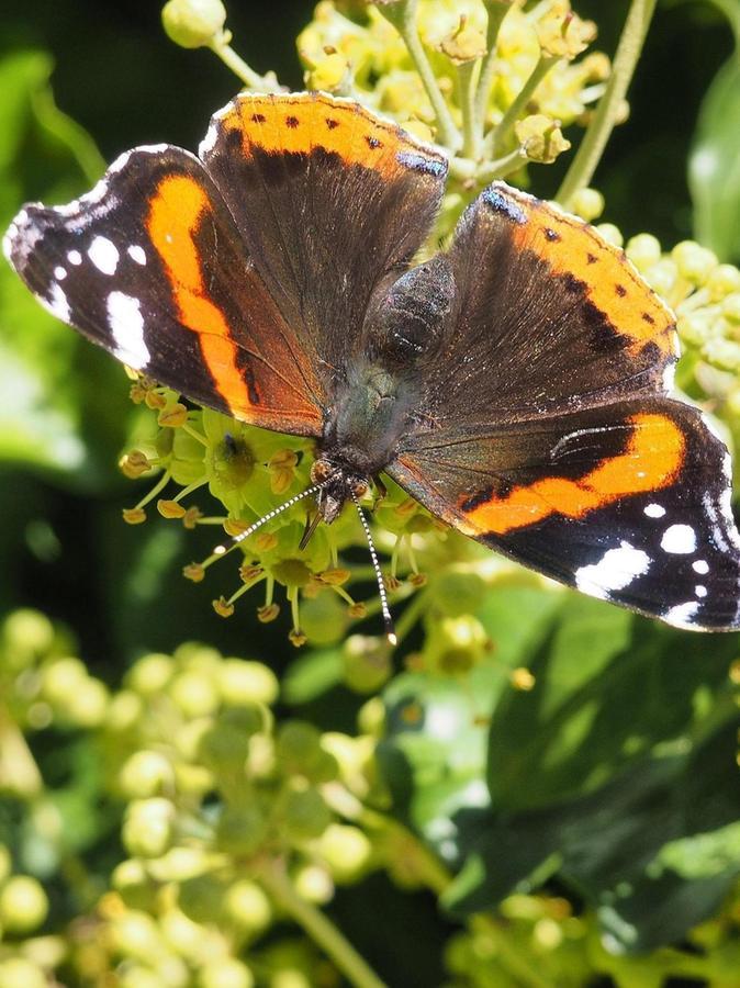 Auch Schmetterlinge sind bedroht.