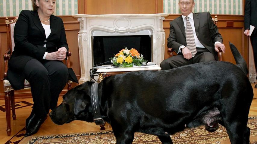 Weil sie als Kind von einem Hund gebissen wurde, hat Angela Merkel