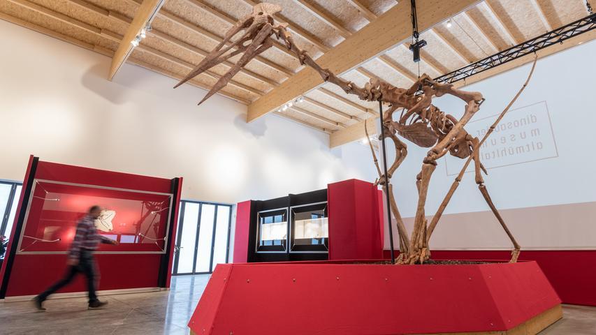 Riesenflugsaurier entdeckt: