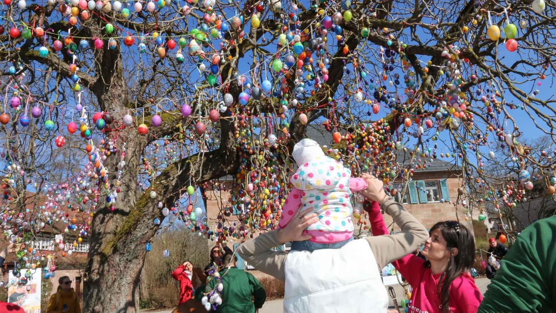 Die Idee zum Rekord-Eierbaum am Hilpoltsteiner Auhof stammt von Carolin Engelbrecht, die auf dem Gelände der Einrichtung einen geeigneten Baum für ihr Projekt fand.