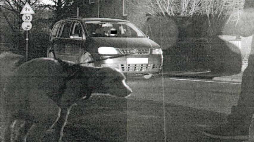 Der Hund in Moers in Nordrhein-Westfalen war selbst nicht zu schnell dran, aber er lief ausgerechnet beim Gassigehen in ein Radarfoto, als der Blitzer auslöste. Das Auto war laut Polizei mit Tempo 42 in einer 30-er-Zone unterwegs.