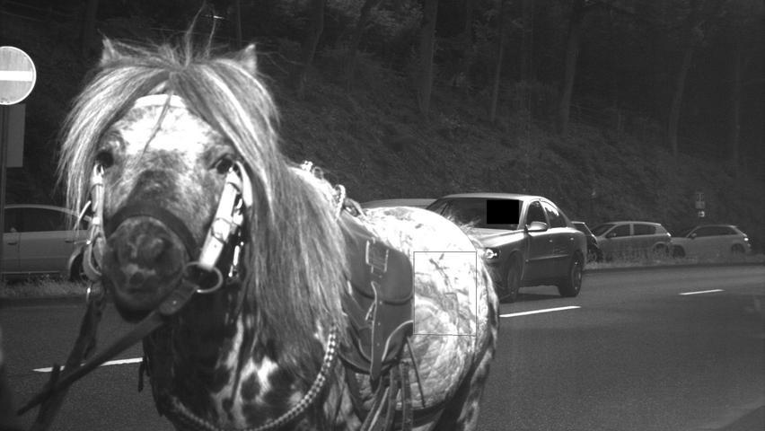 Ein Pferd galoppierte 2014 auf der Bundesstraße 455 in Eppstein im Main-Taunus-Kreis und wurde prompt geblitzt. Ausgelöst wurde die Anlage aber von einem dahinter fahrenden Pkw.