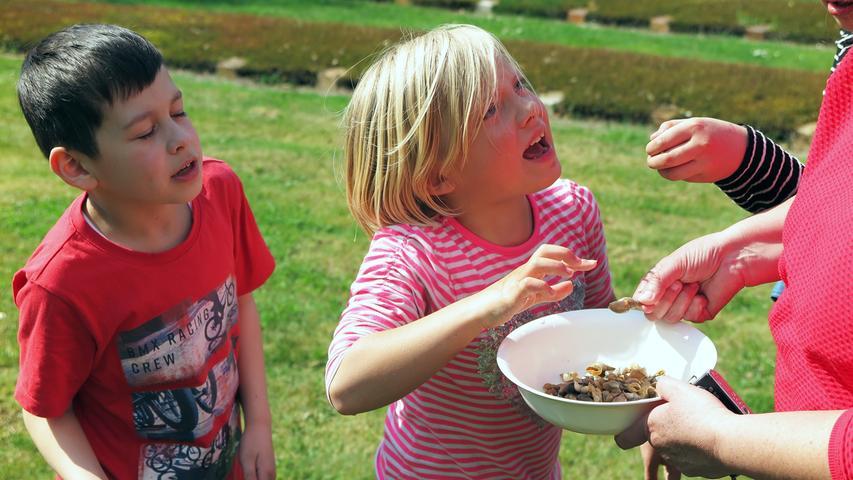 Treuchtlinger Grundschüler pflegen Gelbbauchunken