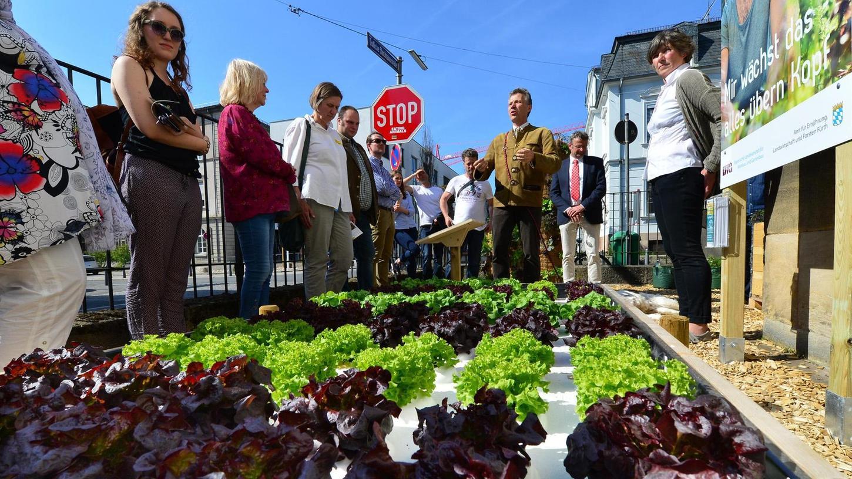 Salat kann auch in einem Trog mit Nährlösung gedeihen, schilderte Forstdirektor Peter Pröbstle den interessierten Besuchern.