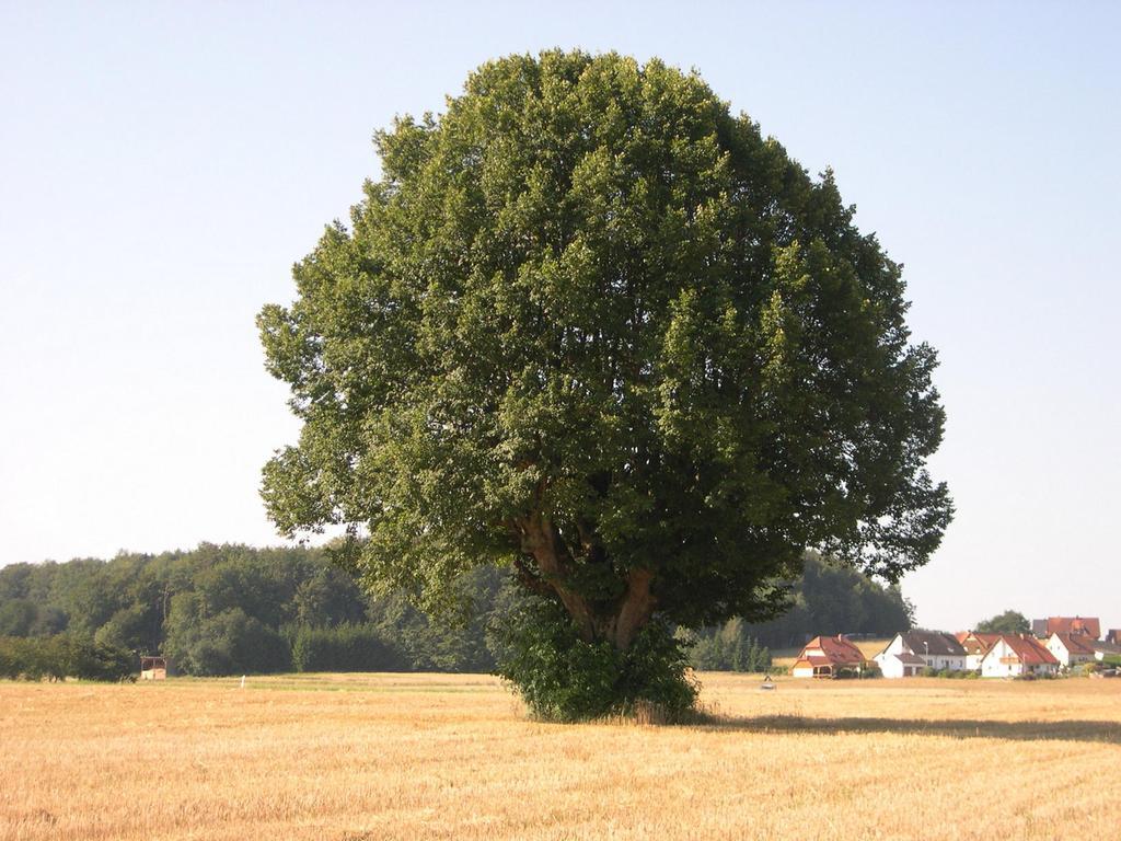 Naturdenkmale  Fotos: Michael Urbanczyk, Landratsamt Forchheim  Datum: 24.04.2018    .