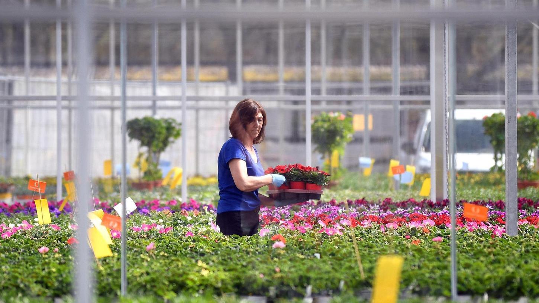 . . . in der Natur-Erlebnis-Gärtnerei der Noris-Inklusion päppeln Beschäftigte mit Behinderung das zarte Grün mit viel Liebe und Umsicht auf.