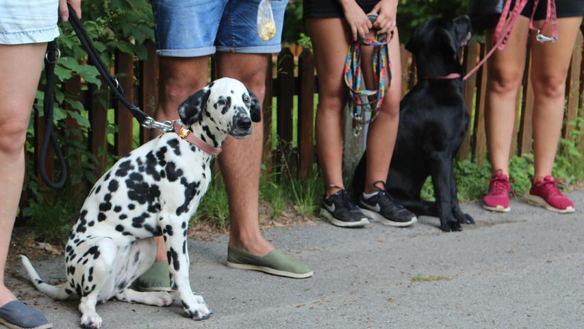 ...ob der Hund von einer Züchterin, aus dem Tierheim oder aus dem Ausland stamme.