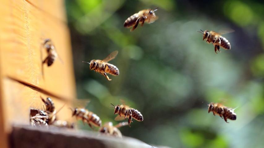 Bienen in Franken bei Hitze eingeschlossen: Tausende sterben