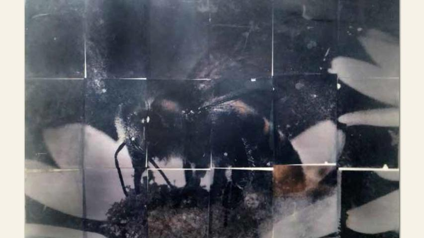 geb. 1951 in Bad Reichenhall lebt in Fürth fly bee ... and die (2018) 100 x 70 x 10 cm Fotografie, Wachs, Holz