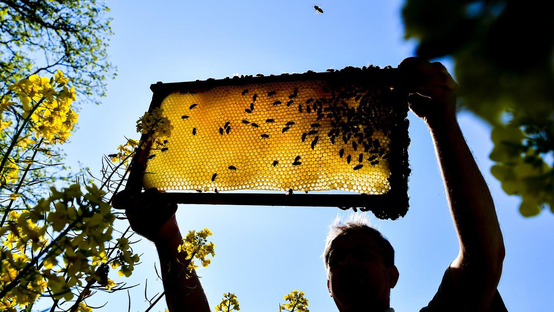 Mehr als 100 Mitglieder zählt der Bienenzuchtverein, der zu den ältesten Altdorfer Vereinen gehört und im Nürnberger Land der älteste Imkerverein ist.