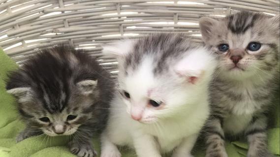 Kuriose Katzenliebe: Katzendiebin baut Katzenparadies auf