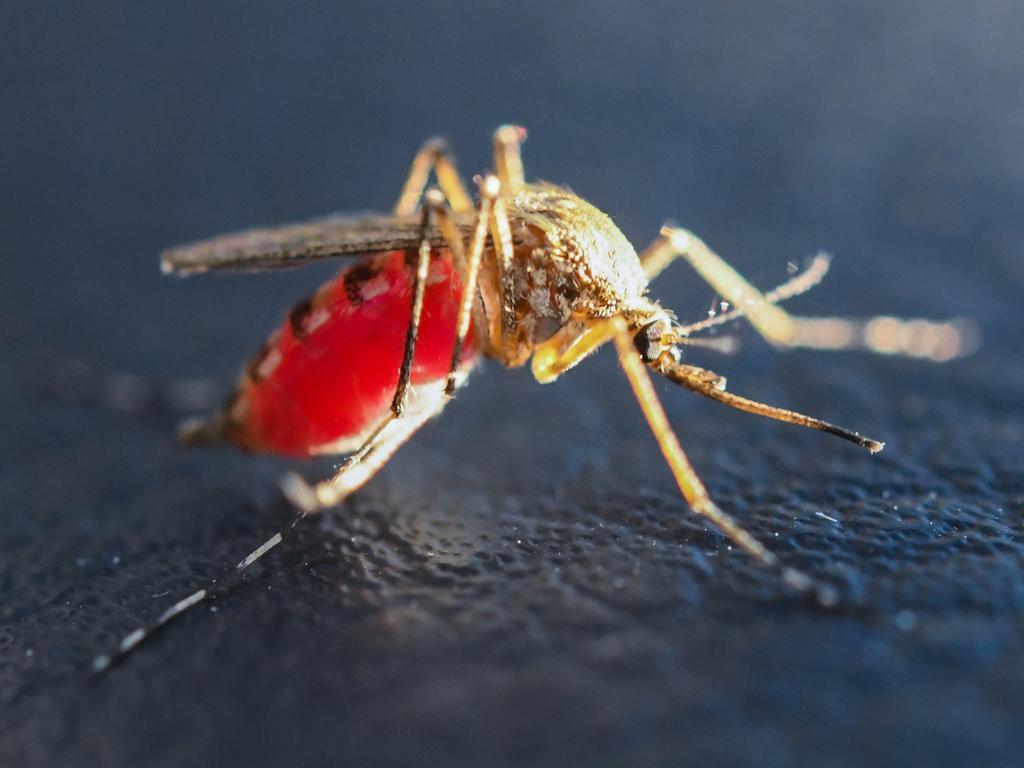 Stechmücken werden in Süddeutschland auch als Schnaken bezeichnet. Egal ob Mücke oder Schnake: Dieses Jahr sind kaum welche zu sehen.