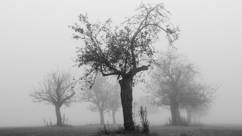 """""""Herbstnebel"""" ist eines der ausdruckstärksten Bilder der Schau in Roßtal betitelt. Es stammt von Günter Hochberger."""