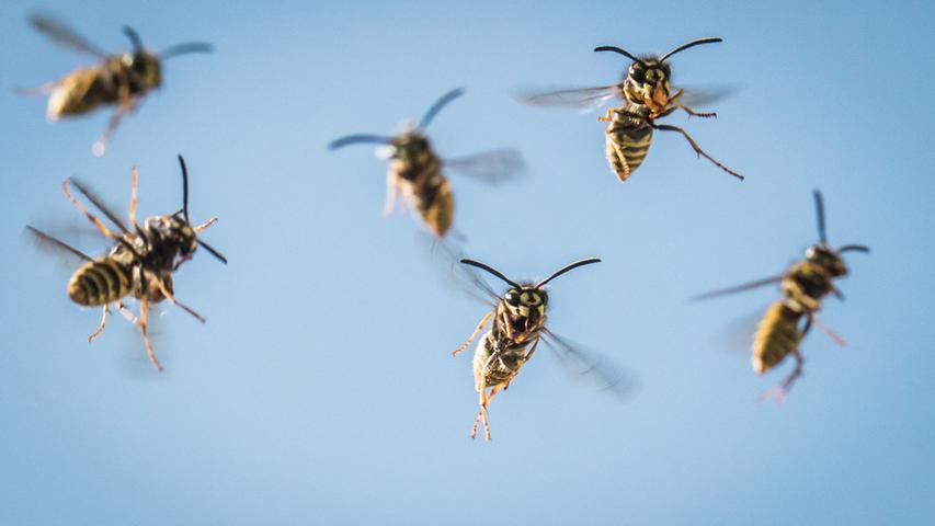 Wespen im Anflug: So wehren Sie sich gegen Angriffe