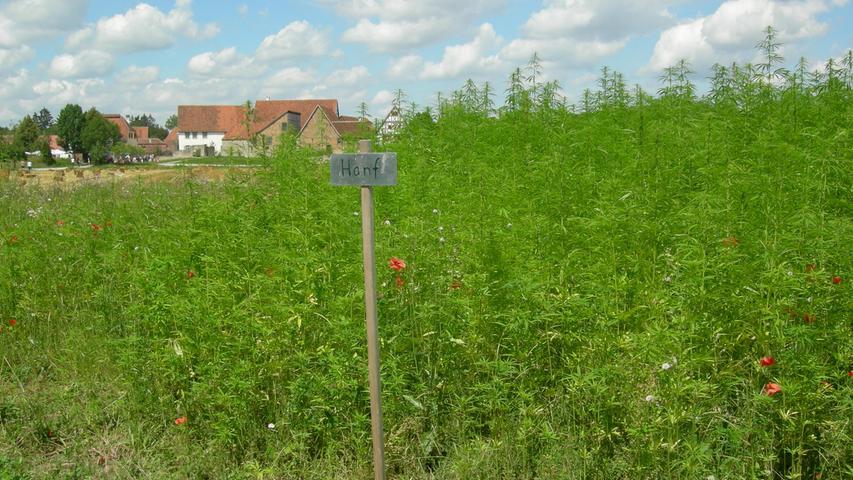 Nutzhanf  darf in Deutschland von Bauern zu industriellen Zwecken angebaut werden. Der THC-Gehalt dieser Pflanzen ist verschwindend gering. Die Samen werden dann für die Gewinnung von Öl, die Fasern für Textilien und die Blüten für die Produktion von ätherischen Ölen verwendet.
