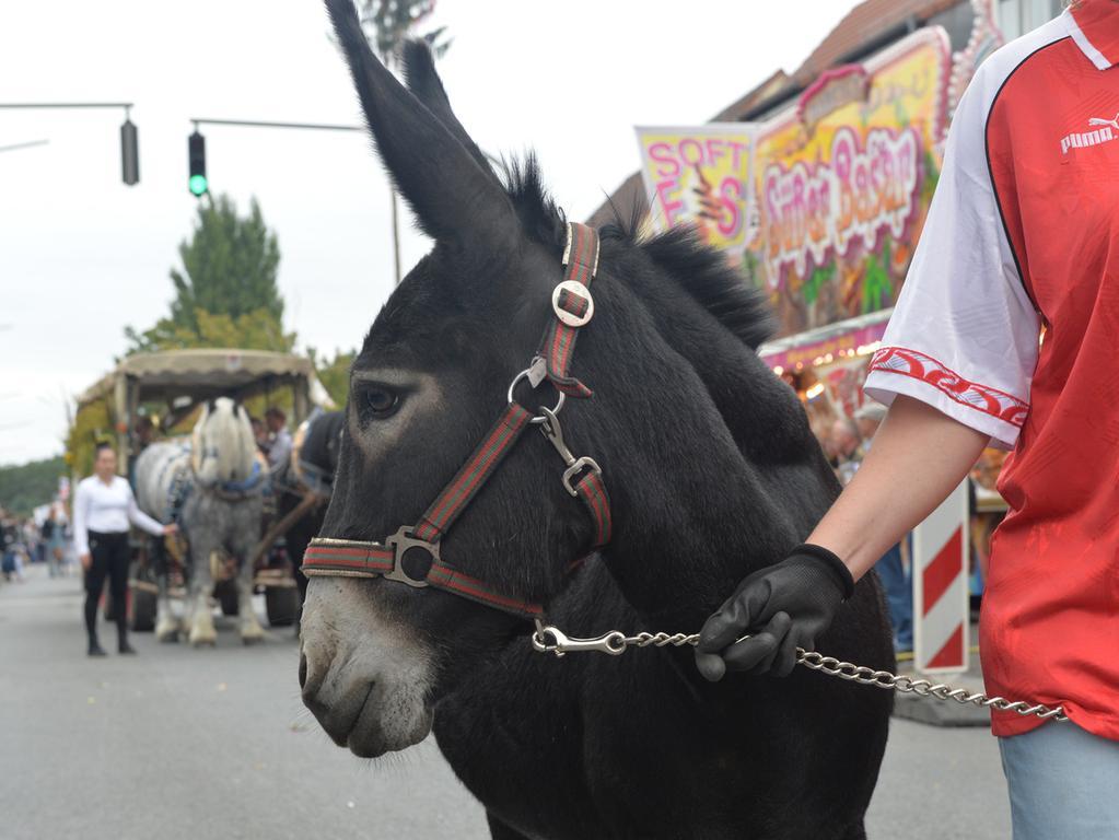 Tausende standen wieder an den Straßenrändern in Eltersdorf, als der traditionelle Kärwasumzug vorbei zog. Die Alten Esel waren stark vertreten..Foto: Klaus-Dieter Schreiter