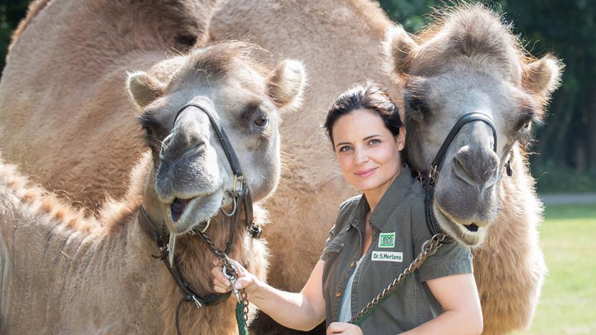 Im Programm des Erste finden so einige Ärzte ihren Platz. Auch eine Tierärztin hat seit 2006 tierischen Erfolg beim öffentlich-rechtlichen Sender. Die ARD entwickelte