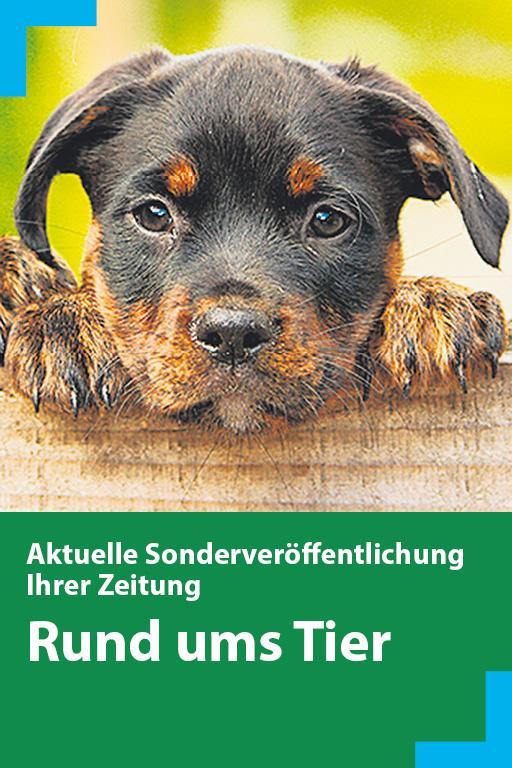 http://mediadb.nordbayern.de/werbung/anzeigen/rund_ums_tier_101018.html