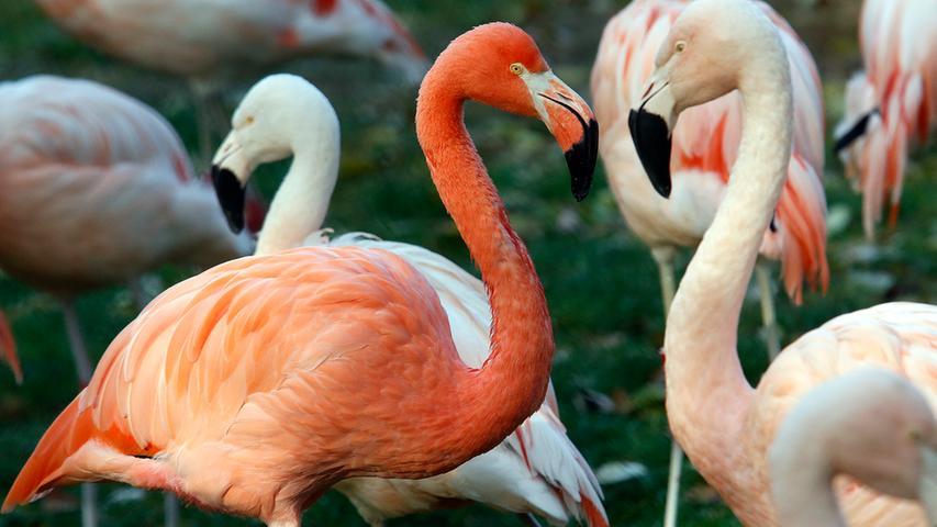 Der Nürnberger Tiergarten kostet im Jahr 13,9 Mio. Euro. Insgesamt sehen sich 1.135.515 Besucherinnen und Besucher jährlich die Tiere an. Pro Kopf beträgt der städtische Zuschuss 3,99 Euro.
