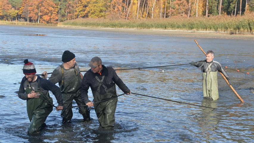 Rund 300 Zentner Karpfen und noch etliche andere Fische sind aus dem Kleinen Bischofsweiher in Dechsendorf abgefischt worden..Foto: Klaus-Dieter Schreiter