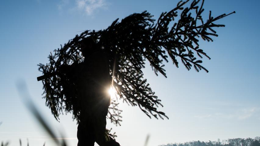 Experte verrät: Mit diesen sieben Tipps hält Ihr Weihnachtsbaum besonders lange