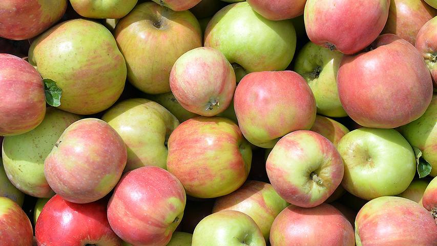 Unangefochtener Spitzenreiter in Bayern ist natürlich der Apfelanbau. Äpfel wuchsen im Jahr 2019 auf 1207 Hektar. 34.837,4 Tonnen konnten insgesamt geerntet werden, die weitaus meisten davon in Schwaben, wo auf 550 Äpfel wuchsen, gefolgt von Unterfranken (349 Hektar) und Oberfranken (94 Hektar). Mittelfranken kam immerhin noch auf 73 Hektar.