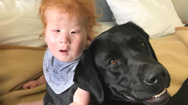 Der kleine Louis aus Pottenstein und Labrador Funny sind wie füreinander bestimmt. Bereits beim Kennenlernen waren beide unzertrennlich.