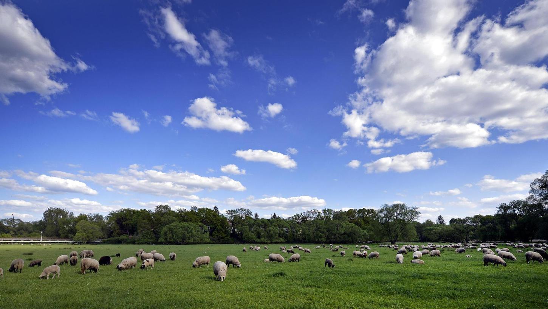 Ein Idyll mit Tieren und alten Bäumen, das bewahrt werden soll: Seit Jahrzehnten weidet im Pegnitztal Ost, das jetzt zum Naturschutzgebiet ernannt wurde, eine Schafherde.