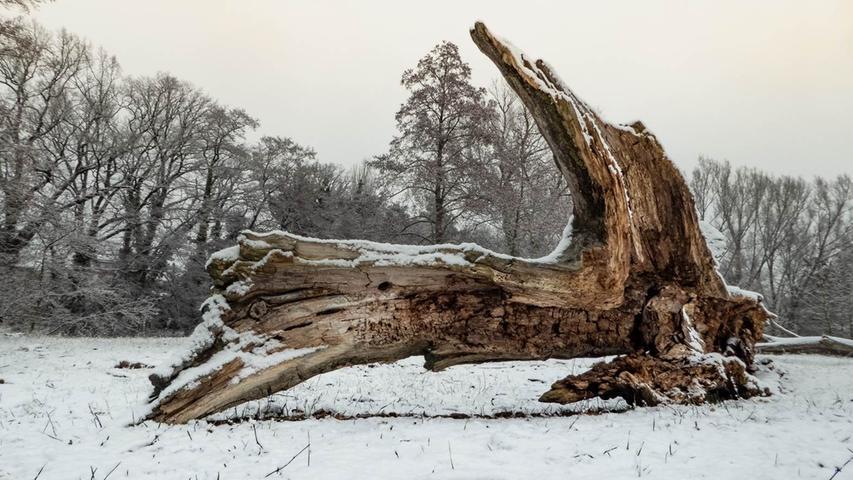 Ein natürliches Kunstwerk im Schnee. Gesehen am Hainberg.