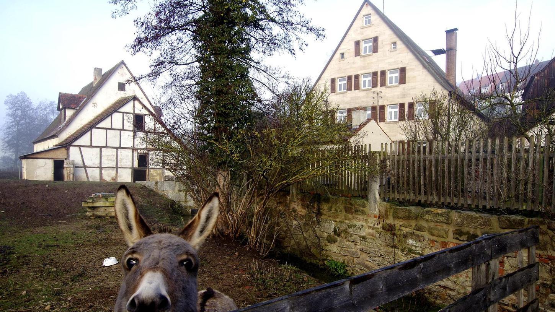 In der Dorfmühle in Wilhermsdorf wurde einst nicht nur Getreide gemahlen, auch ein Sägewerk, das noch existiert, gehörte dazu. Heute ist sie ein Wohnhaus mit viel Platz für Esel, Schafe und Hühner.