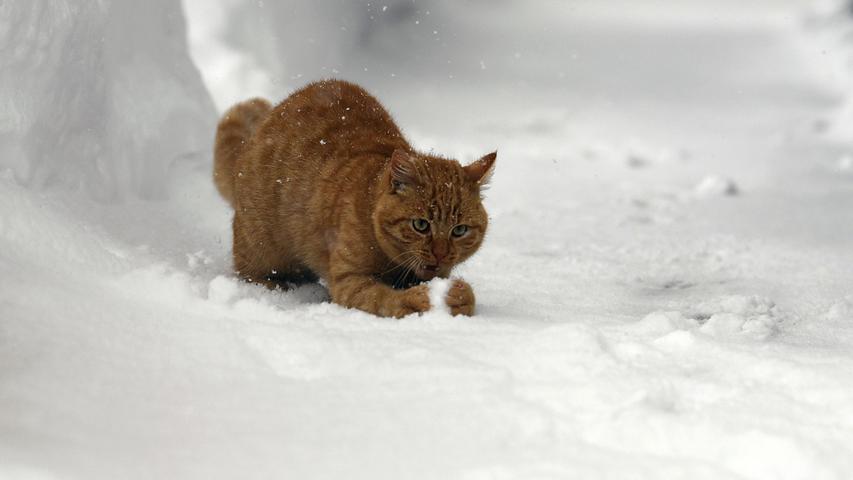 Während sich viele Kinder und Tiere noch draußen vergnügen, haben die Schneemassen bereits gefährliche Ausmaße erreicht.