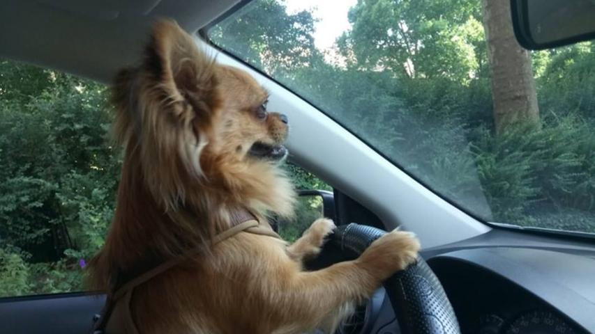 Frech, verrückt, liebenswert: So schräg sind die Hunde unserer User