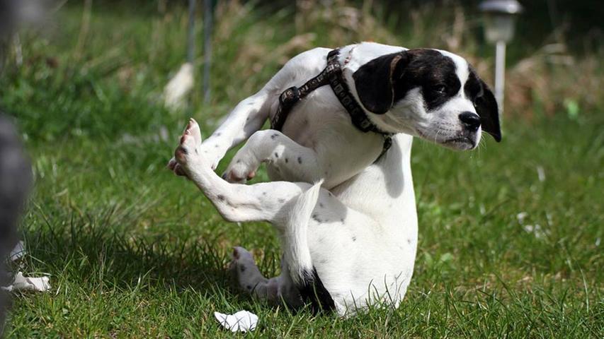Haltungsnote 1A! Um das hinzubekommen brauchen Akrobaten jahrelanges Training.