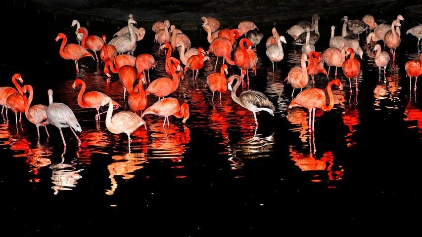 Nachts im Tiergarten: Ein Streifzug durch tierische Finsternis