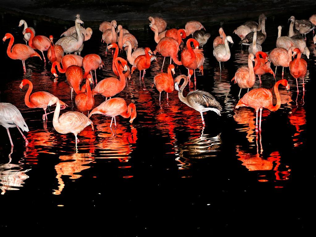 RESSORT: Lokales..DATUM: 09.01.19..FOTO: Michael Matejka ..MOTIV: Nacht im Tiergarten..ANZAHL: 1 von 15..