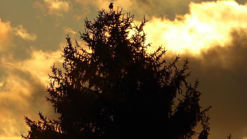 Von ganz oben genießt dieser Vogel den Sonnenuntergang