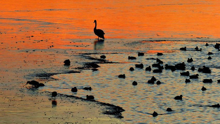 Zwischen Eisplatten und offenem Wasser haben sich zahlreiche Vögel im orange schimmernden Sonnenuntergang am Rothsee eingefunden.