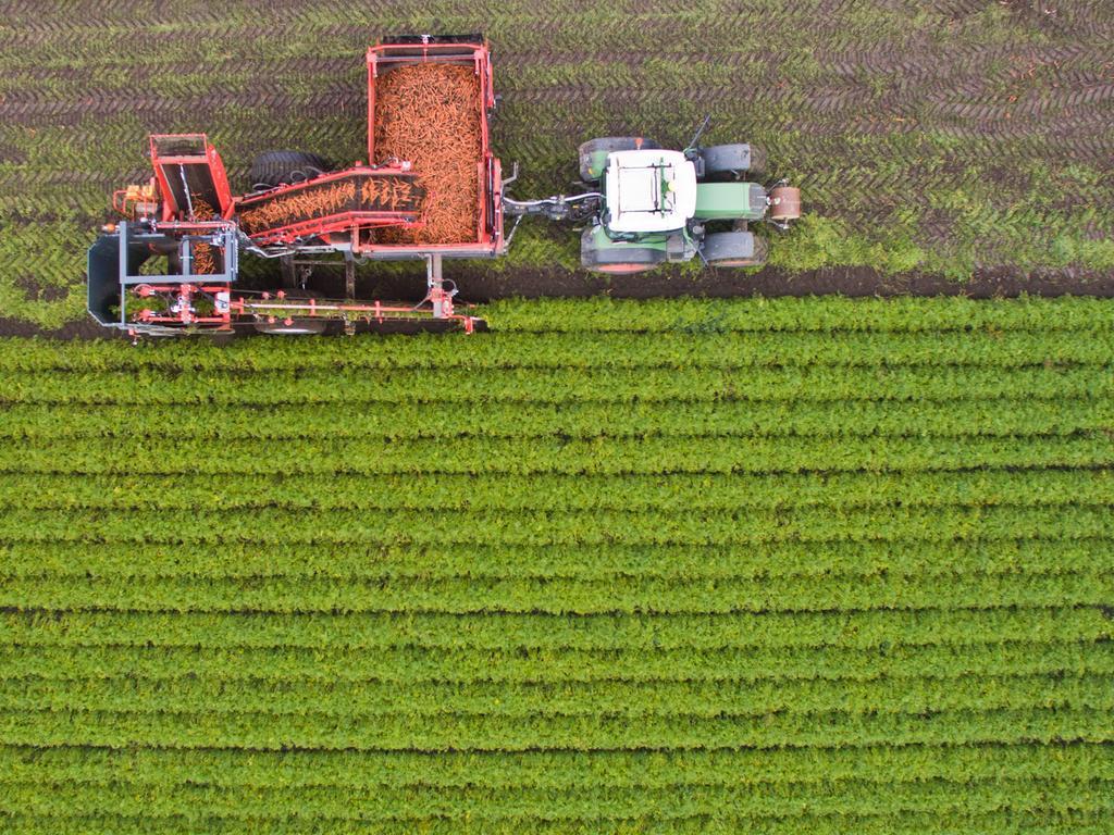 Ein Landwirt der BioBoerdeLand Gbr erntet am 24.10.2016 Bio-Möhren auf einem Feld bei Algermissen im Landkreis Hildesheim (Niedersachsen) (Luftaufnahme mit Drohne). Durch die warme und trockene Witterung im Spätsommer hat die Möhrenernte nach Angaben der Landwirtschaftskammer Niedersachsen je nach Region später begonnen und für schlechtere Erträge gesorgt. Foto: Julian Stratenschulte/dpa +++(c) dpa - Bildfunk+++  