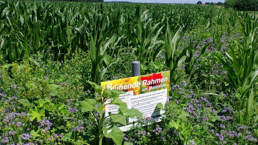 Auch konventionell wirtschaftende Bauern tun etwas für den Artenschutz. Manche legen zum Beispiel Blühstreifen um ihre Felder an, damit Insekten Nahrung finden. Bayern fördet das finanziell. Laut Umweltbundesamt ist das positiv, dennoch müssten weniger Pestizide eingesetzt werden. Nicht nur Insekten würden beeinträchtigt: