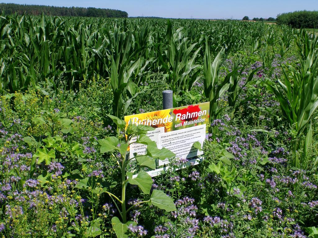 """Redaktion: Fürth..Foto: Heinz Wraneschitz..Motiv: Blühende Rahmen um Maisfelder:..In Veitsbronn machen heuer erstmals zwei Landwirte mit bei dem vom Bayerischen Bauernverband seit 2011 beworbenen Programm...Weil es gerade Bienen hilft, haben die bayerischen Bauern 2014 den ersten """"European Bee Award"""" gewonnen...Und außerdem gibt es noch EU-Fördergelder..Datum: 06.07.17"""