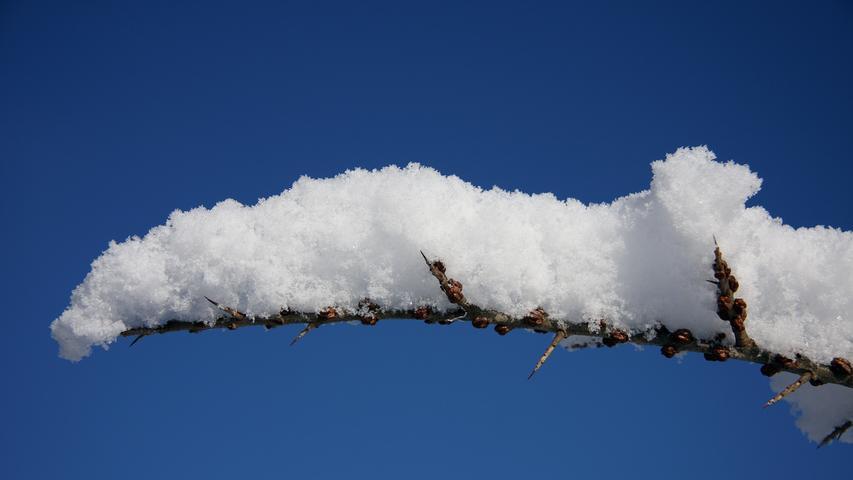 Locker-flockig liegt der frische Schnee auf dem dünnen Ästchen.