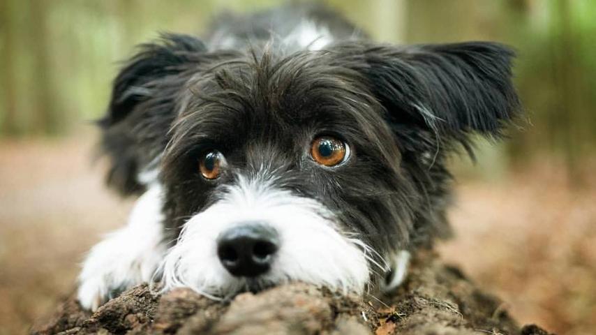 Wie ein Model posiert dieser Hund auf einem Baumstamm.