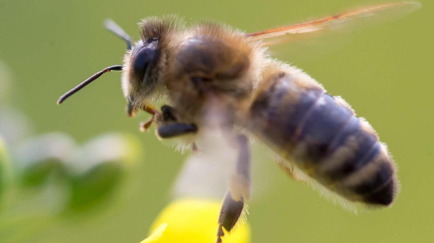 Auch Bienen sollen vom Volksbegehren profitieren.