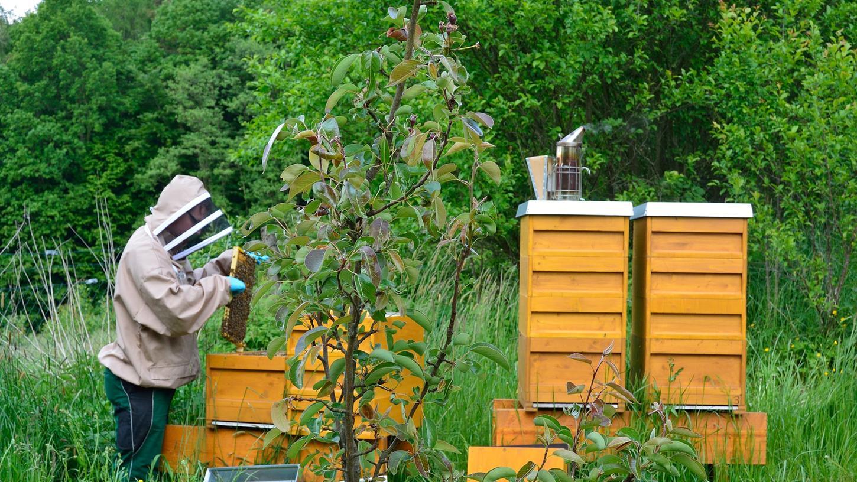 Neue Blumen, ein Swimmingpool für Bienen - viel mehr muss gar nicht verändert werden.
