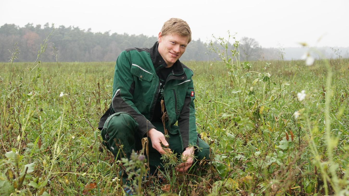 Christian Bauer zeigt die Pflanzen der Zwischenfrucht, deren Wurzeln den Boden auflockern und auf die Hauptfrucht vorbereiten.
