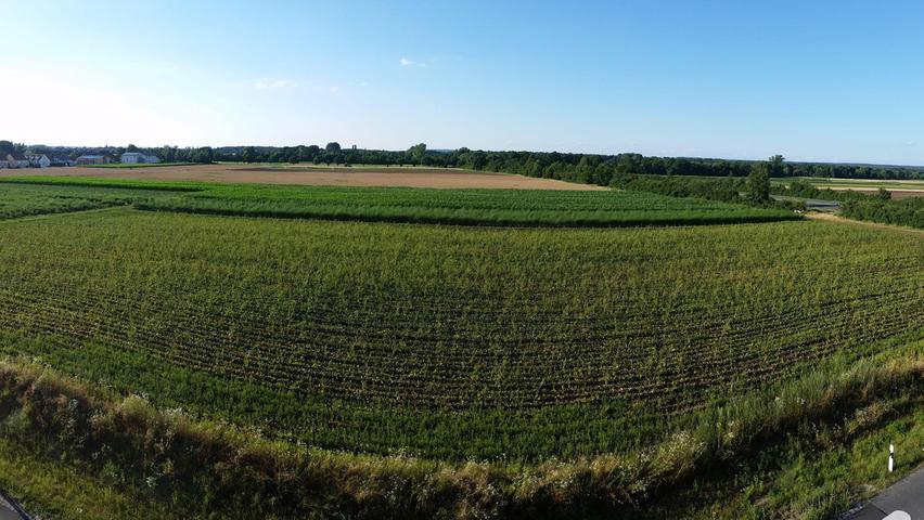 Viele Ideen hat es für diese13 Hektar Land an der nordöstlichen Grenze von Boxdorf gegeben. Ein Mix aus Gewerbe und Wohnen — mit bis zu 355 Wohneinheiten — sollte hier entstehen. Doch daraus wird vorerst nichts.