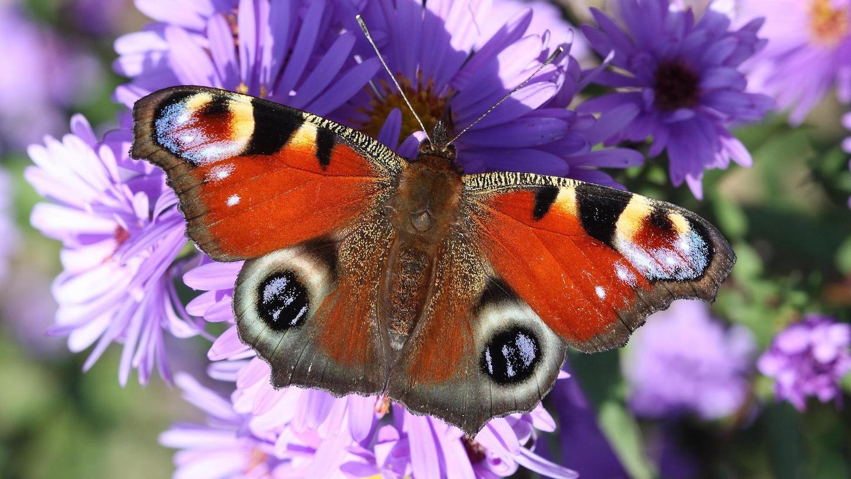 Naturnah gestaltete Gärten tragen dazu bei, die Artenvielfalt von Insekten zu verbessern.