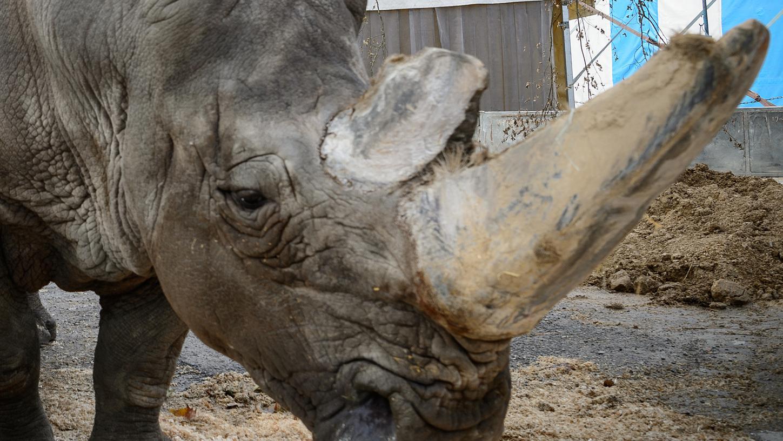 Ein kleiner Trost ist zumindest, dass Tsavo in seinen letzten Tagen stabil und schmerzfrei war, wie seine Tierärztin verkündete.